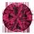 Pink-Sapphire (19)